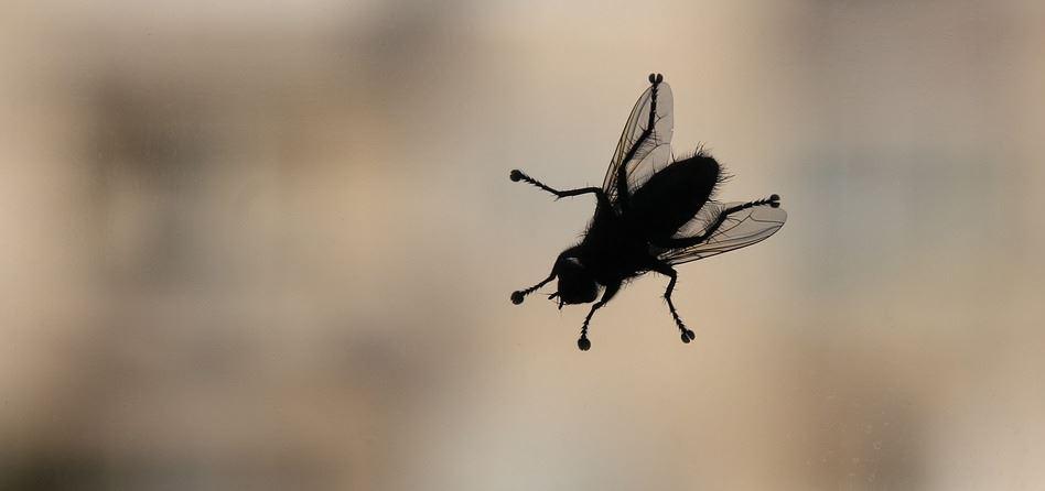 Insektenschutztür